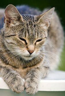 Free Cat Royalty Free Stock Photo - 2820695