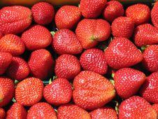 Free Stawberries Stock Photos - 2822313