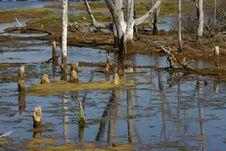 Free Wetlands Bog Reflection Royalty Free Stock Photography - 2824977