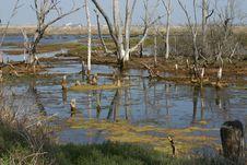 Free Wetlands Bog Reflection Royalty Free Stock Photo - 2824985