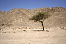 Free Dry Desert In Red Sea Region Royalty Free Stock Photography - 2825567