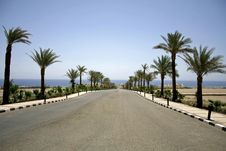 Free Desert Road In The Red Sea Reg Royalty Free Stock Photos - 2825648