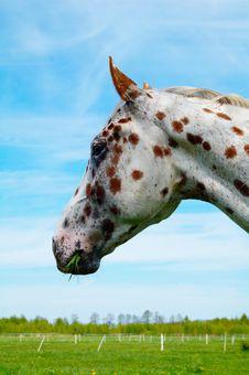 Free Horse Royalty Free Stock Photo - 2827445