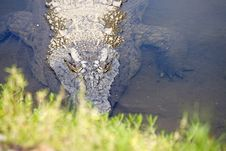 Free Crocodile Royalty Free Stock Photos - 2828088