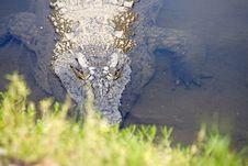 Free Crocodile Royalty Free Stock Photos - 2828088