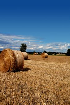 Free Yellow Grain Harvested On A Fa Stock Photos - 2828523