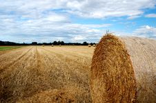 Free Yellow Grain Harvested On A Fa Stock Image - 2828531