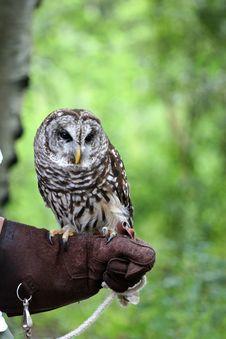Free Barn Owl Stock Image - 2829941