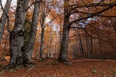 Free Forest In Autumn Stock Photos - 28207563
