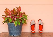 Free Posture Office And Shoes Orange Royalty Free Stock Image - 28209586
