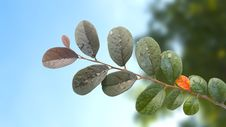 Free Leaves Stock Photo - 28209620