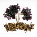 Free Seaweed And Mushrooms Royalty Free Stock Images - 28213719
