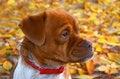 Free Serious Dog Royalty Free Stock Photo - 28218505
