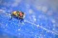 Free Close Up Of A House Fly Royalty Free Stock Images - 28218689