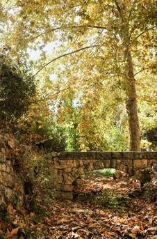 Free Autumn Near Jerusalem Stock Image - 28216791