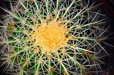 Closeup Of A Cactus Stock Photos