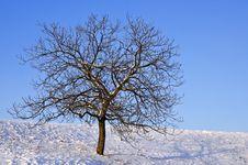 Free Naked Tree On A Sunny Day Royalty Free Stock Photos - 28218738