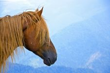 Free Hairy Horse Head On A Bluish Mountain Landscape Royalty Free Stock Image - 28218756