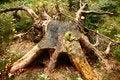 Free Stump Stock Photography - 28221522