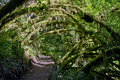 Free Archway Path Of Mossy Trees In Forest Stock Image - 28222661