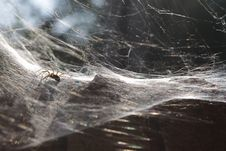 Free Spidery Trap Royalty Free Stock Photo - 28221475