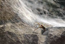 Free Spidery Trap Royalty Free Stock Photos - 28221488