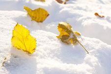 Free Autumn Leaf On Snow Royalty Free Stock Photos - 28221908