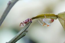 Free Lacewings Meet Spider Royalty Free Stock Photo - 28228145