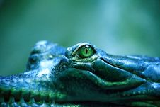 Free Crocodile Eye Stock Images - 28229304