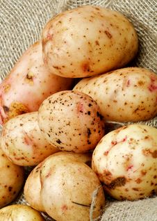Raw Potato Stock Photography