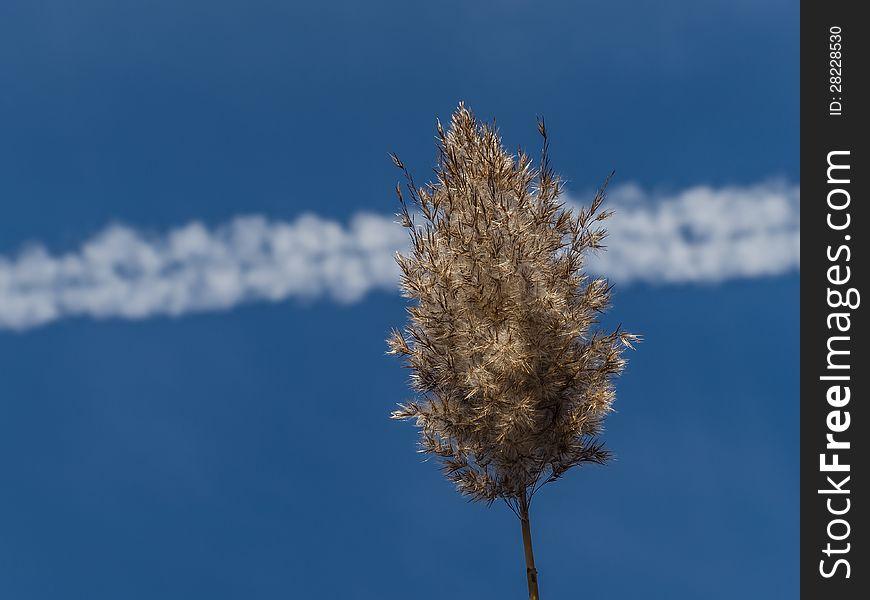 Trace of jets plane