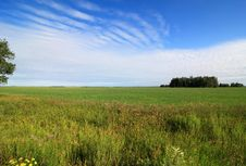 Summer Landscape With Green Field And Blue Sky. Stock Photography