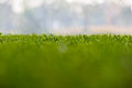 Free Soft Green And Blue Background Of Grass Royalty Free Stock Image - 28245776
