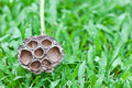 Free Dry Lotus On The Yard Royalty Free Stock Photos - 28245808