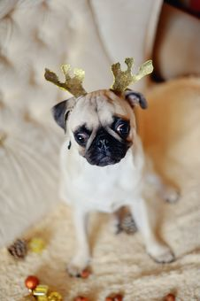 Free Pug On A Holiday Royalty Free Stock Photos - 28246528