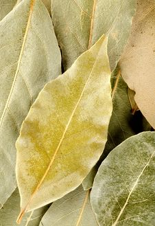 Free Vertical Background With Bay Leaf Stock Images - 28247184