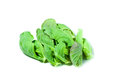 Free Shoots Of Cabbage Stock Images - 28251484