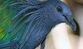 Free Pigeon Stock Photos - 28254183