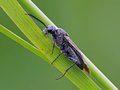 Free Sawfly Stock Images - 28256234