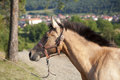 Free Arabian Horse Royalty Free Stock Photos - 28259608