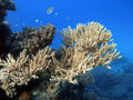 Free A Beautiful Pink Coral At Underwater Scenery Royalty Free Stock Photos - 28259898