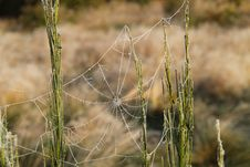 Free Spider S Cobweb. Royalty Free Stock Images - 28264219