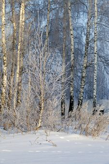 Free Winter Forest Stock Photography - 28265192