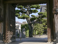 Free Japanese Temple Gate With Big Tree Stock Photography - 28276652