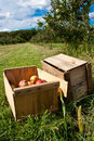 Free Apple Crates Royalty Free Stock Images - 28280979