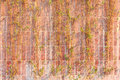 Free Red Brick Wall With Dead Vines Stock Photo - 28289180