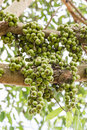 Free Fig Fruit Stock Photos - 28289263