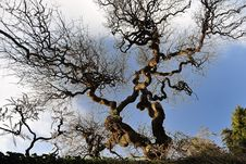 Free Trees Stock Image - 28287971