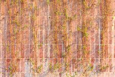 Red Brick Wall With Dead Vines Stock Photo