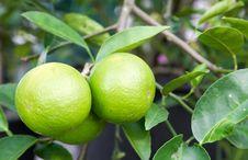 Free Pomelo Fruit Stock Photo - 28289380